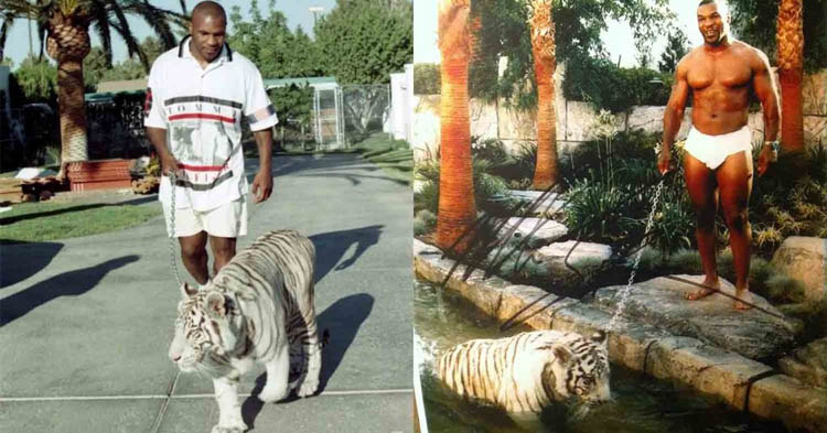 Mike Tyson Tigers
