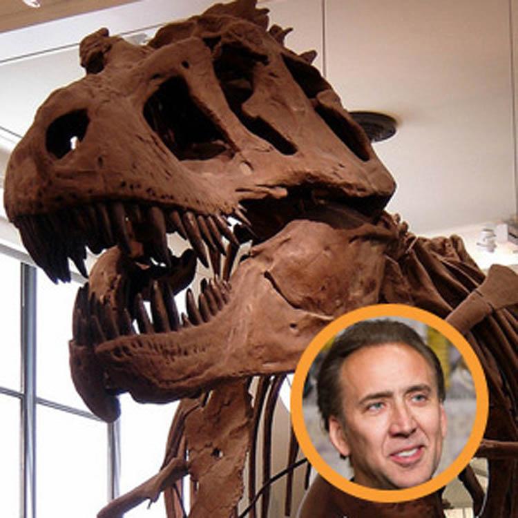 Nicholas Cage Fossils