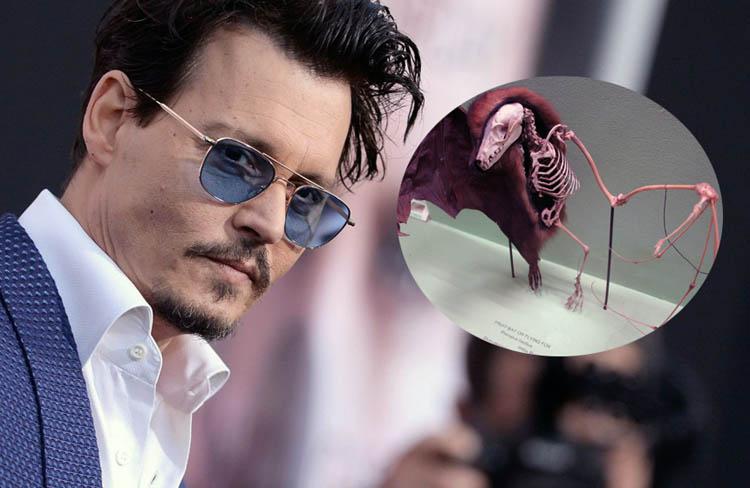 Johnny Depp Pigeon Skeleton