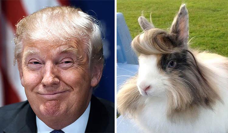 Animals Looking Like Donald Trump